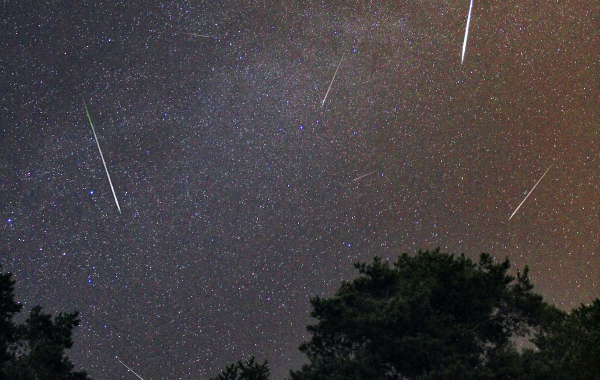 Meteor shower above the treeline at Headlands International Dark Sky Park in Michigan