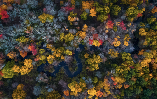 Road in Massachusetts winding through the woods with colorful fall foliage