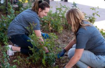 2 team members volunteering in a garden