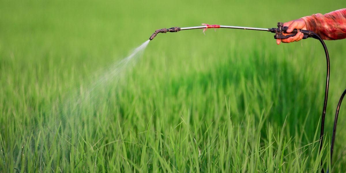 Five Alternatives to Pesticides