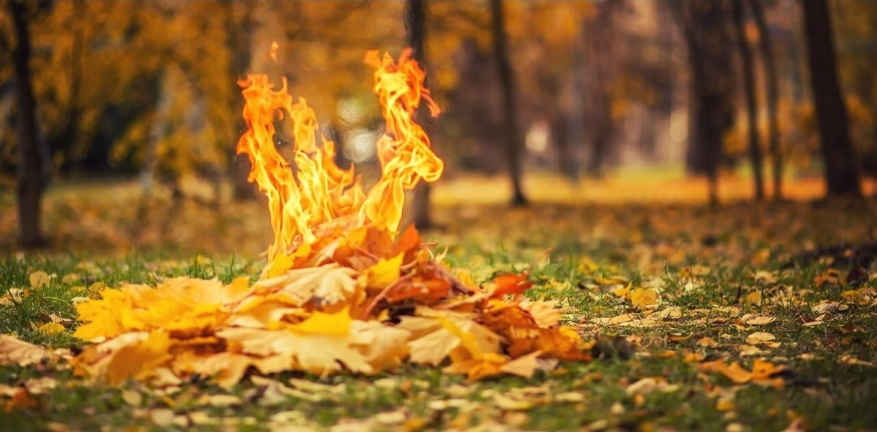 How To Burn Leaves