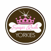 Sugar Rush Yorkies