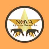 Nova Quarter Horses
