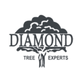 Diamond Tree Experts
