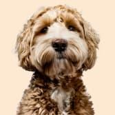 Cha Cha's Dog Daycare