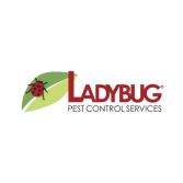 Ladybug Pest Control