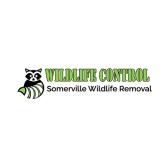 Somerville Wildlife Removal