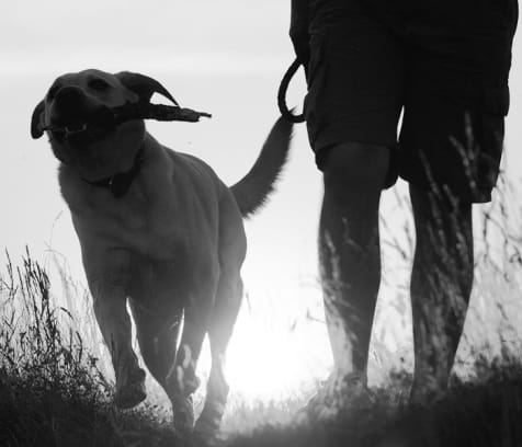 cover image of High Tail Hikes  dog-walkers/3.jpg