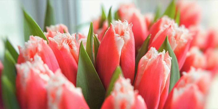 florists-hero-banner.jpg