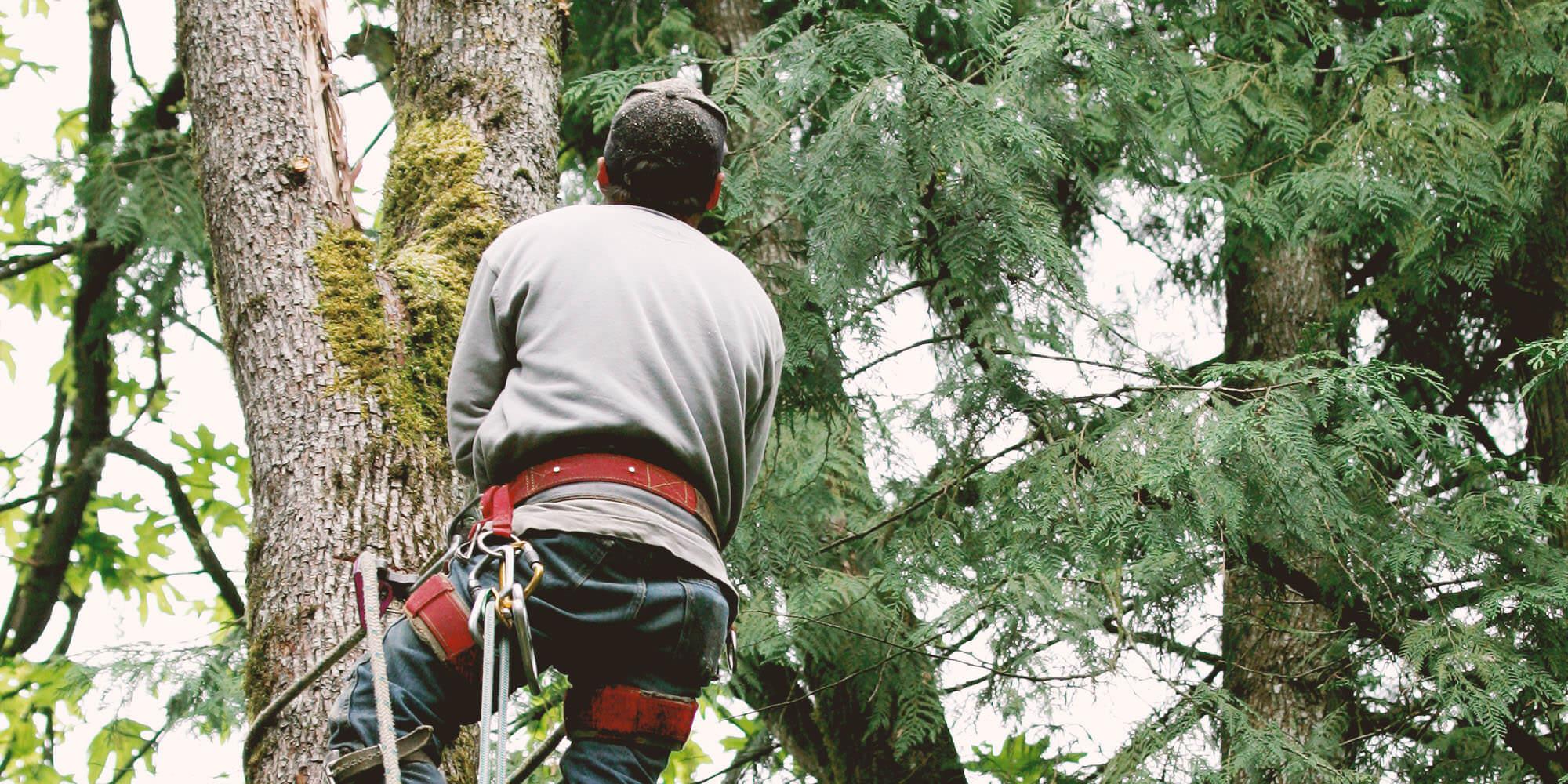 17 Best Salt Lake City Tree Service Professionals | Expertise.com
