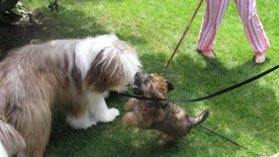 Doggy Duet