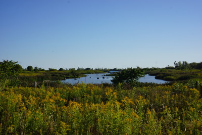 My Urban Paradise: The Leslie Street Spit