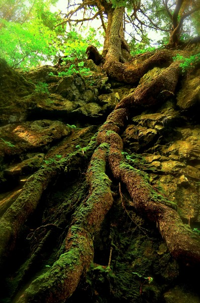 Gwaii Haanas national park