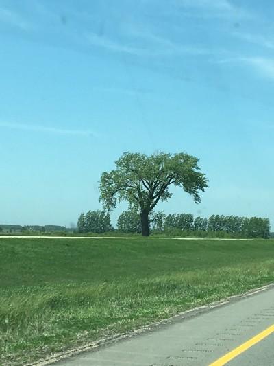 Halfway Tree