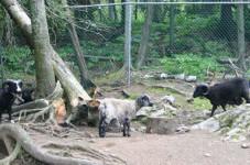 Zoo Cherry Brook