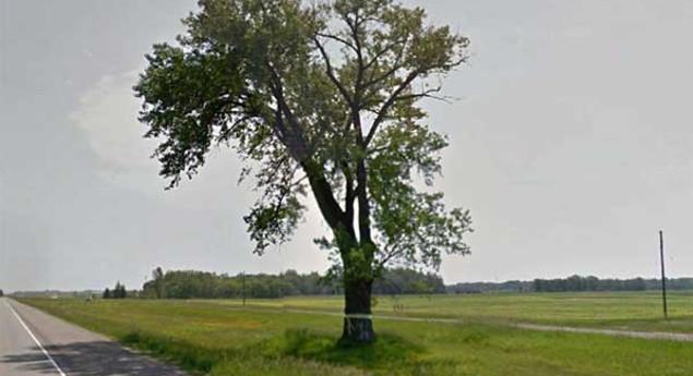 Half-Way Tree