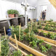 Arviat Community Greenhouse