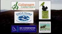 5 Wonderful Organizations Helping Wildlife Thrive