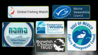 6 Hardworking Nonprofits Building Sustainable Fisheries