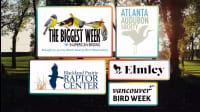 5 Great Organizations & Events For Bird Lovers