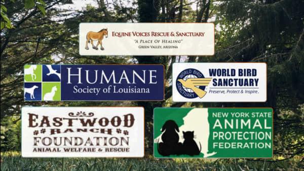 5 Caring Organizations Dedicated To Helping Animals
