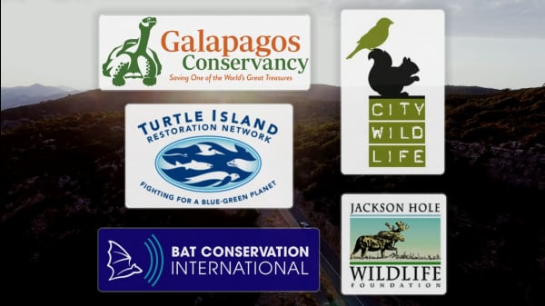 5 Wonderful Organizations Helping Wildlife Thrive