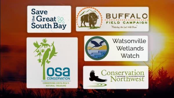 5 Organizations Preserving & Restoring Vital Habitats