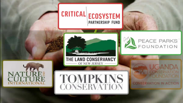 7 Conservation Organizations Making A Difference