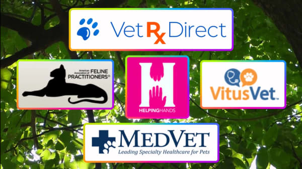 5 Organizations Dedicated To Veterinary Care