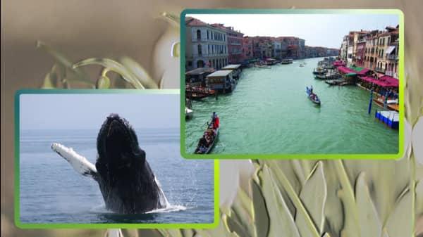 6 Kayak Tours For Adventurous Travelers