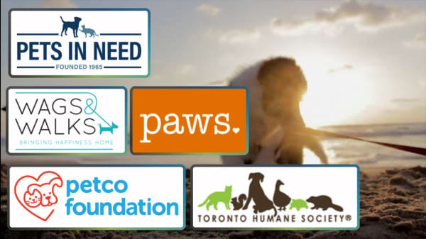 5 Organizations Supporting Pet Adoption