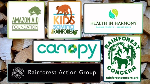 6 Organizations Fighting To Protect Rainforests