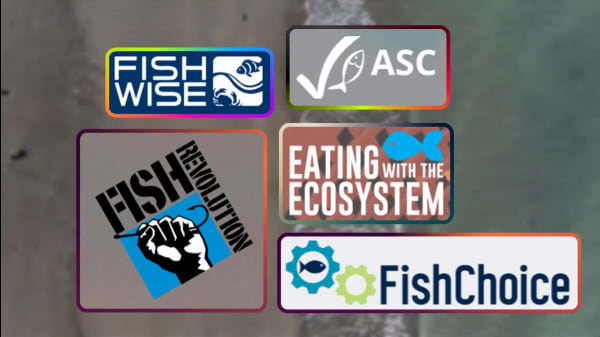 5 Organizations Leading The Charge For Sustainable Seafood