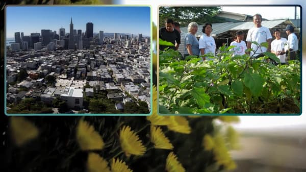 6 Companies And Organizations With A Commitment To Urban Farming