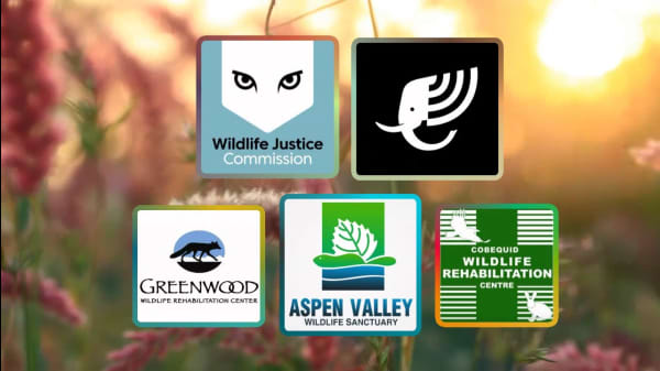 5 Organizations Working To Protect Wildlife