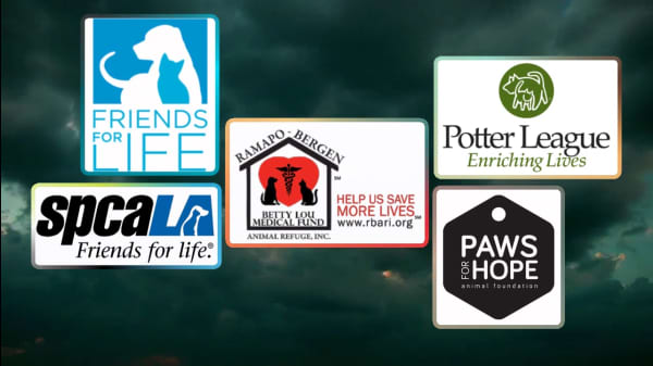 5 Remarkable Animal Welfare Organizations