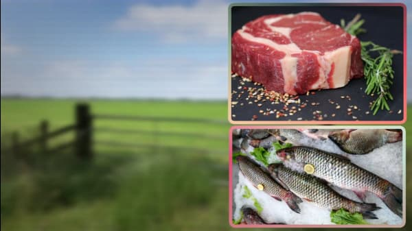 5 Providers Of Organic And Sustainable Meat And Fish For Conscious Consumers