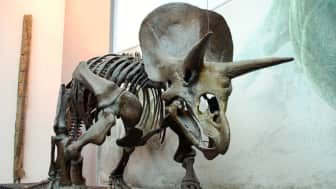 The non-technical study is about the fossil discoveries of backboned animals that inhabited the Western United States.