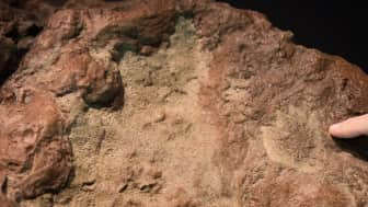 It includes his recommended sites on where to track down dinosaur footprints.