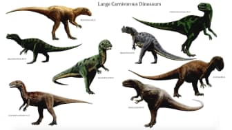 This book depicts every dinosaur and pre-historic creature from best-known to lesser-known, in accurate coloured illustrations and anatomical drawings.