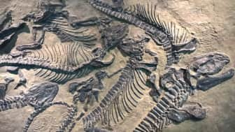 Details are included about where fossil evidence was found and the different classifications of these animals based on their habitats and behaviors.