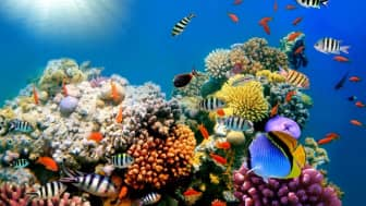Fish are among the most diverse animals on the planet, with over 33,000 species that have been discovered so far.