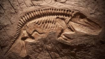 If you have a great interest in the world of paleontology, or know someone who does, this list might help you in finding the perfect gift.