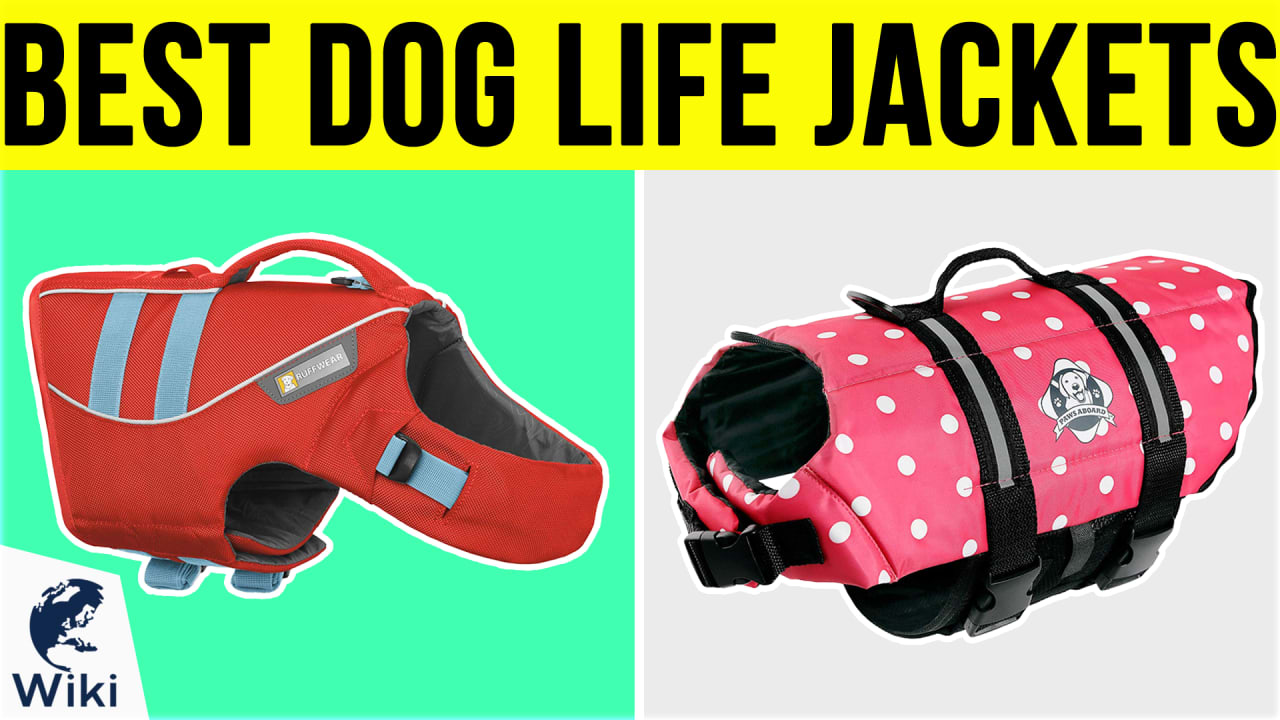 10 Best Dog Life Jackets