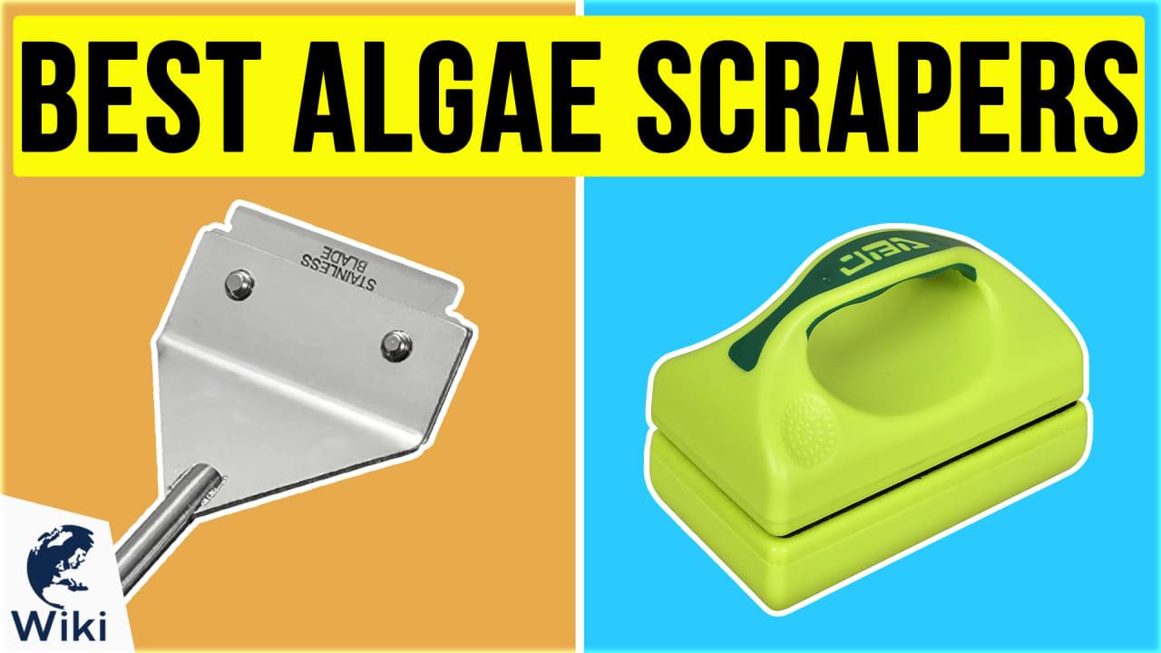 10 Best Algae Scrapers