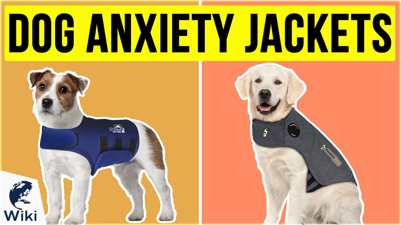 6 Best Dog Anxiety Jackets