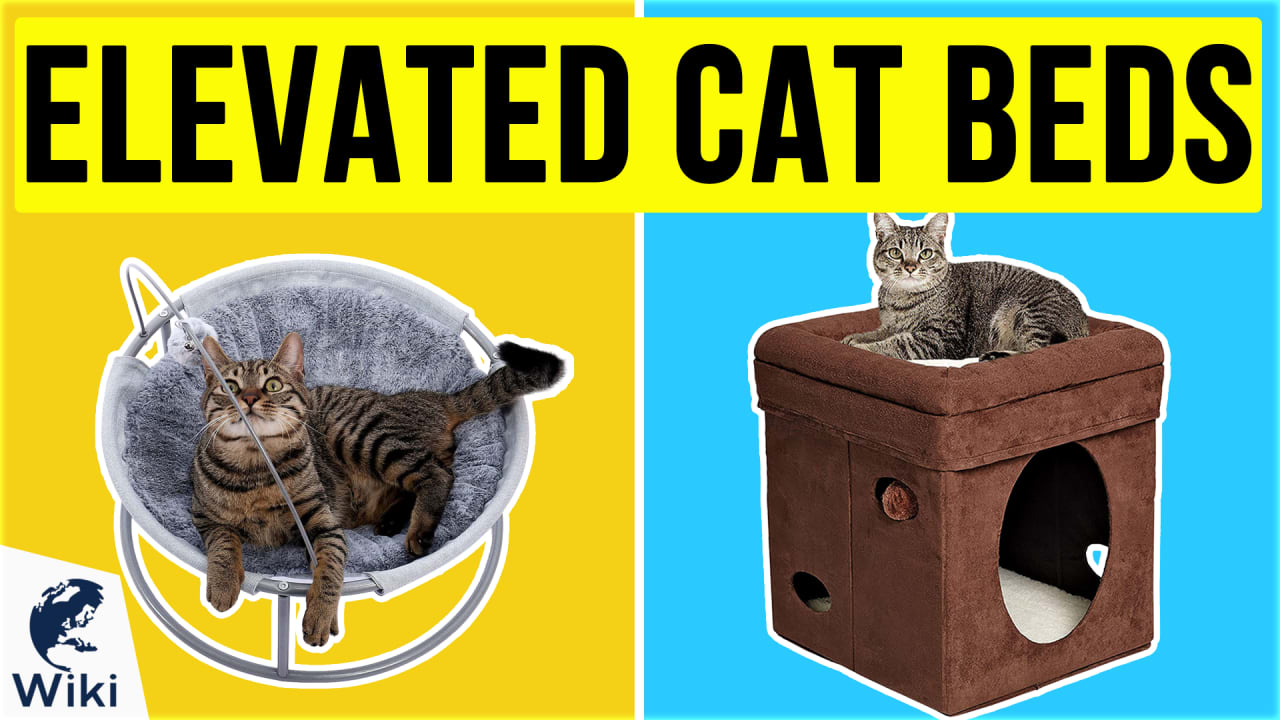 10 Best Elevated Cat Beds