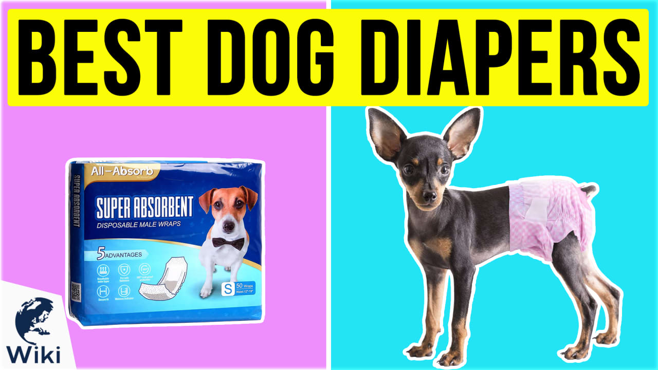 10 Best Dog Diapers