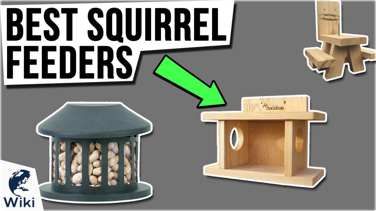 10 Best Squirrel Feeders