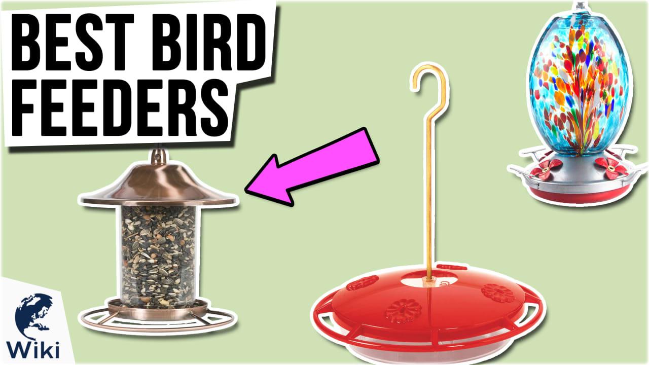 10 Best Bird Feeders